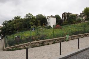 Vendanges Montmartre (1)