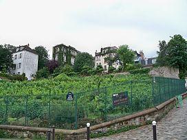Vendanges Montmartre (2)